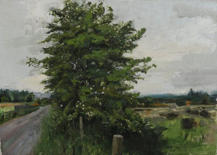 White Thorn, oil on linen, 47.5 x 66cm