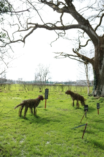 Willow Dogs @ St. Christopher's Services Longford, community garden project 2019